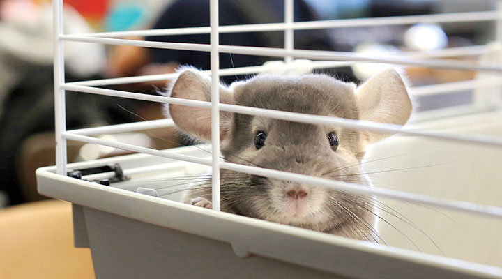 Debate Should Classroom Pets Be Banned